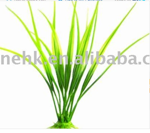 Aquatic Plant (AP-22 )